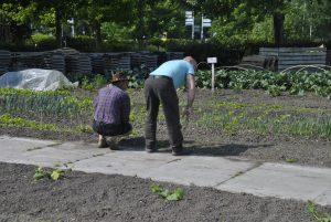 vrijwilligers aan de slag in de tuin